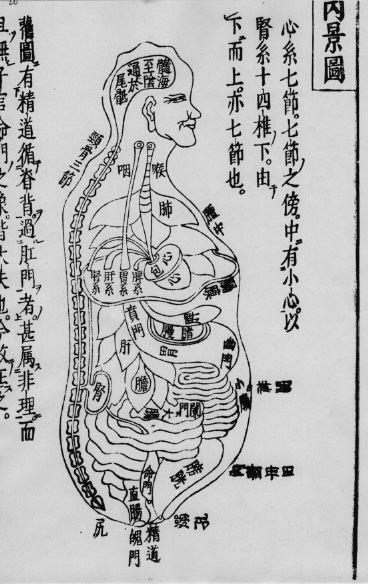 解剖の勉強は「殴り描き写し」【医療通訳の勉強】